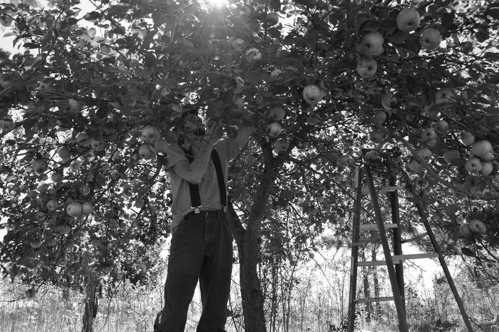 ben and the apple tree
