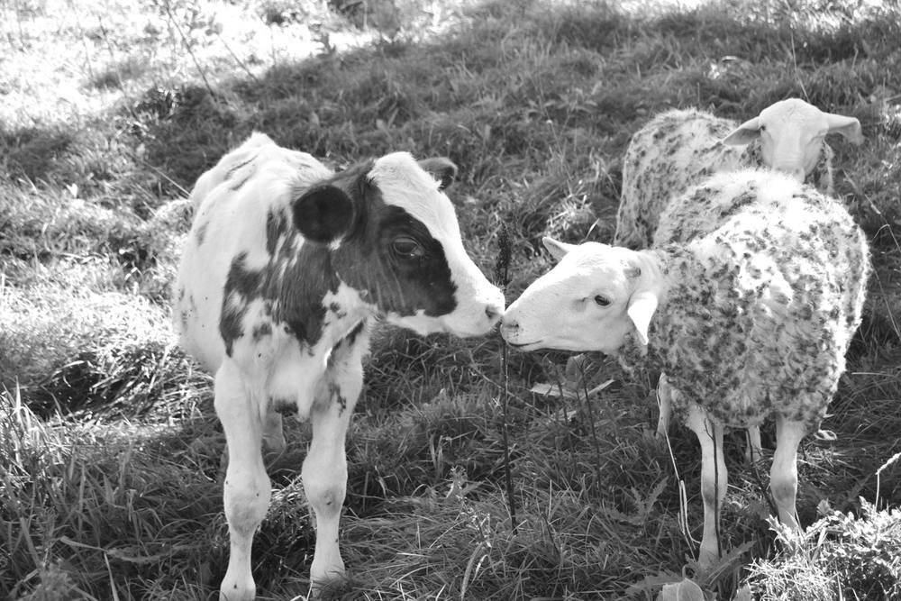 farm love!