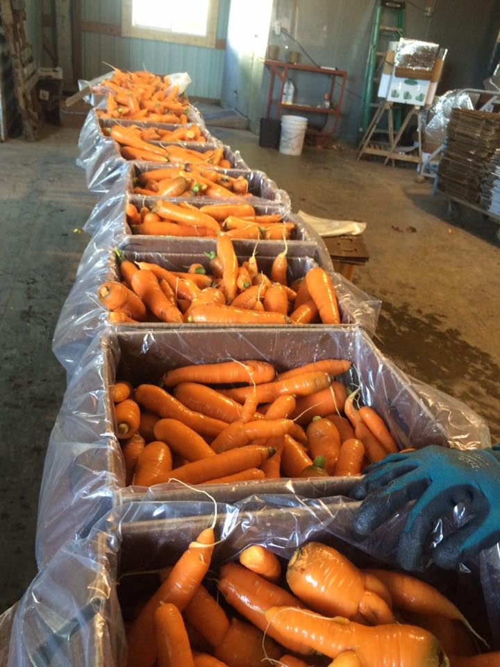 lovely clean carrots