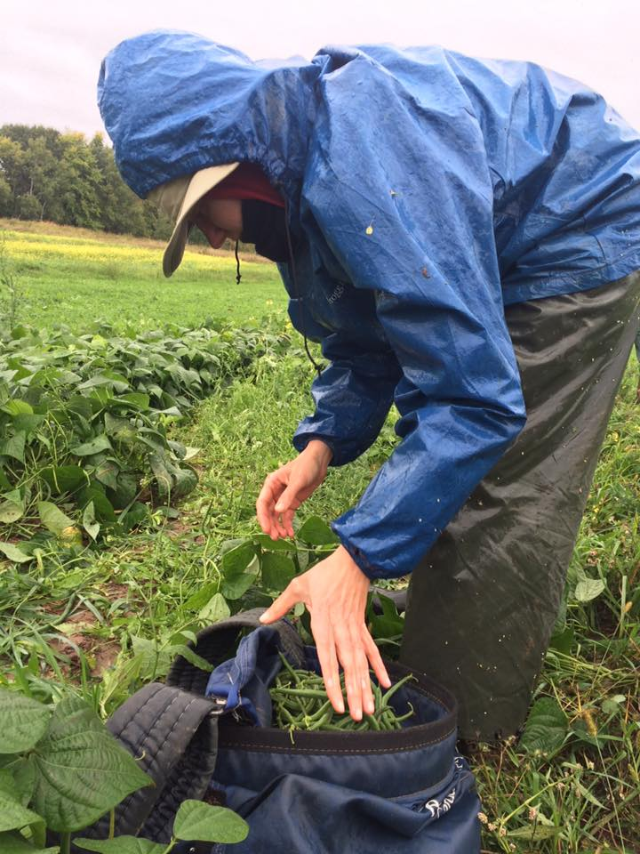 Aimee picking beans in the rain