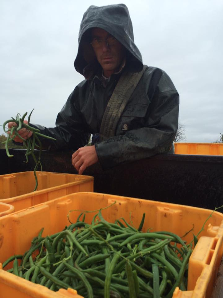 and even Darth Maul showed up to pick some beans in the rain. He's not all bad, I guess.