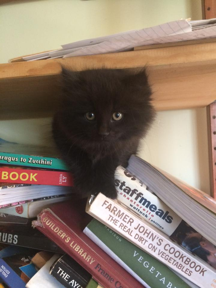 "we got a new ""barn kitty"" who somehow seems to be living in the farmhouse.  Here's Momo looking for some good recipes for the blog."