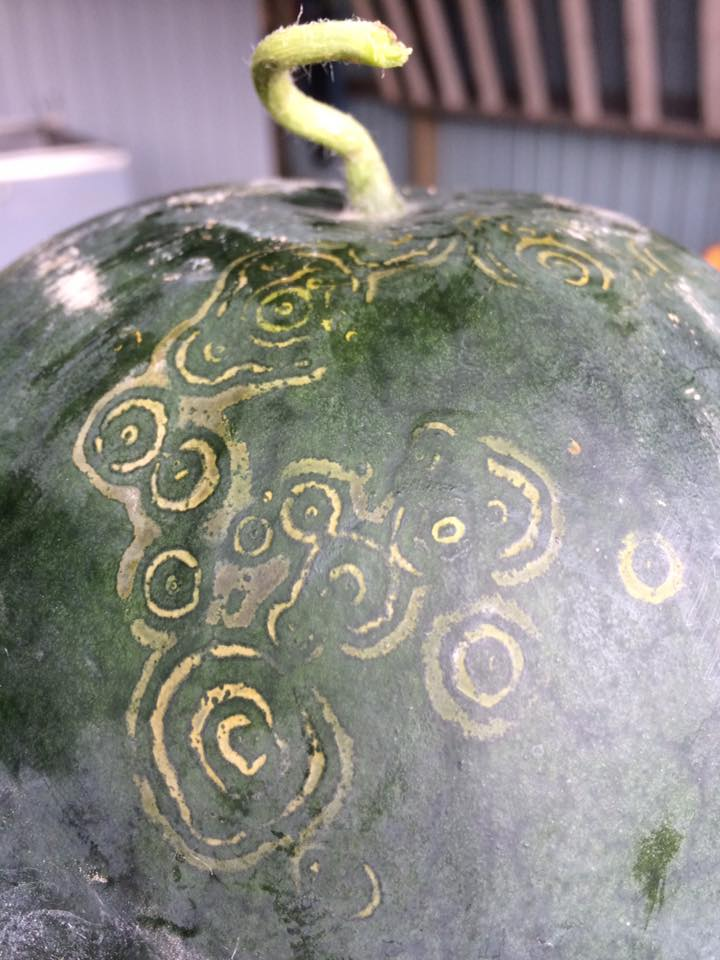 What are these watermelons trying to tell us?