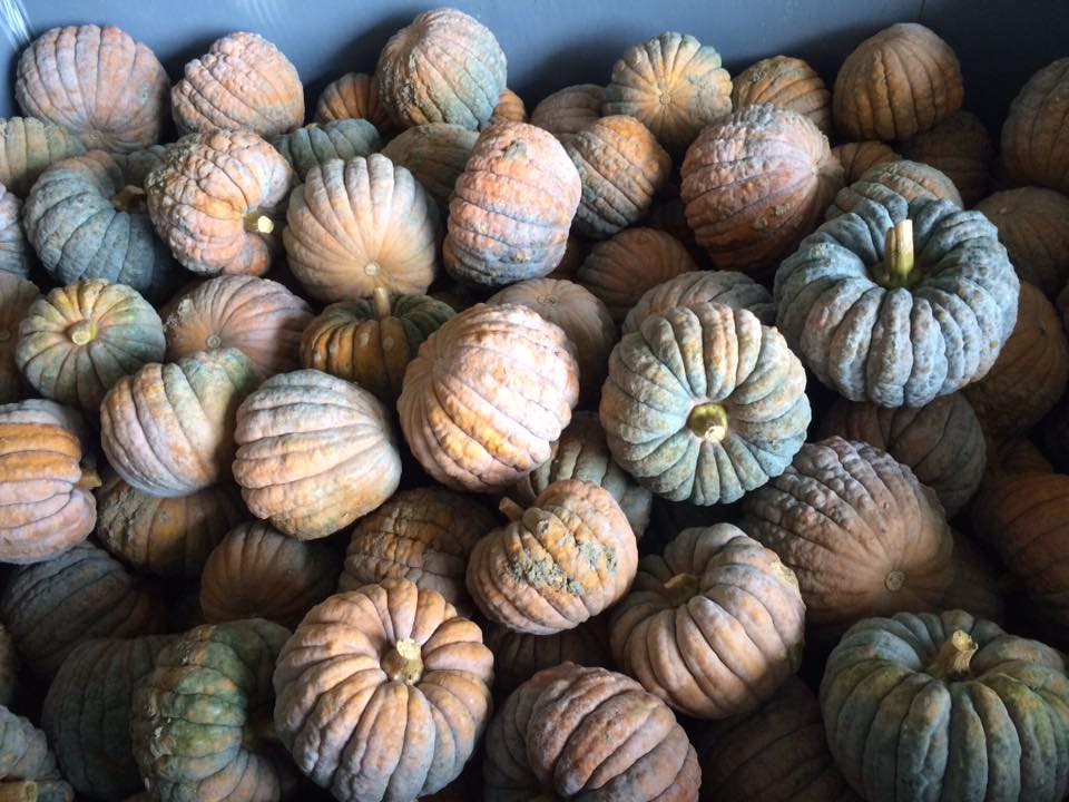 A favorite Winter Squash, Black Futsu, will be included in future boxes.