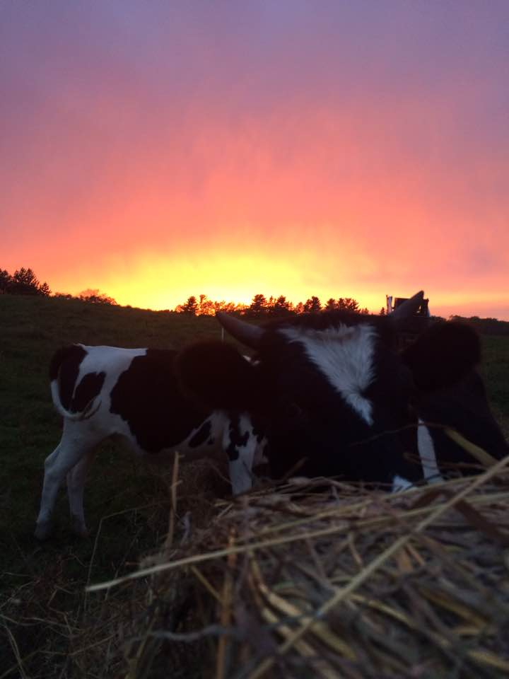 Sunset hay buffet