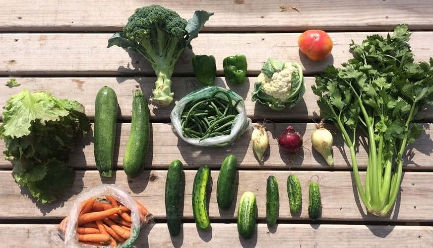 leaf lettuce zucchini/ summer squash broccoli bell peppers cauliflower tomato! celery onions cucumbers carrots green beans