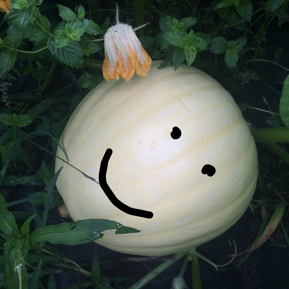 Giant pumpkin update