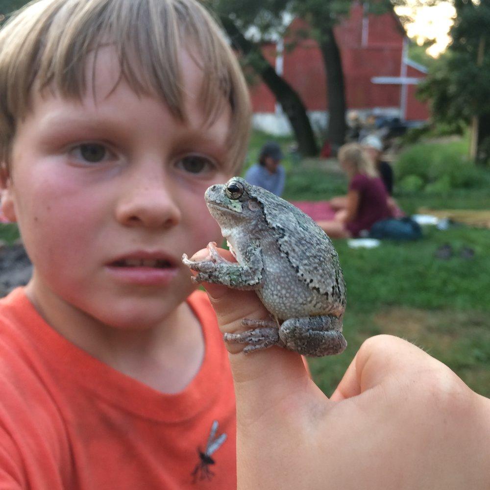Tree Frog Friend