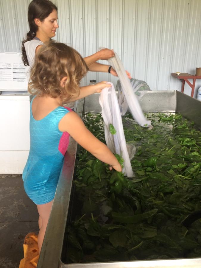 Sadie and Hannah washing greens
