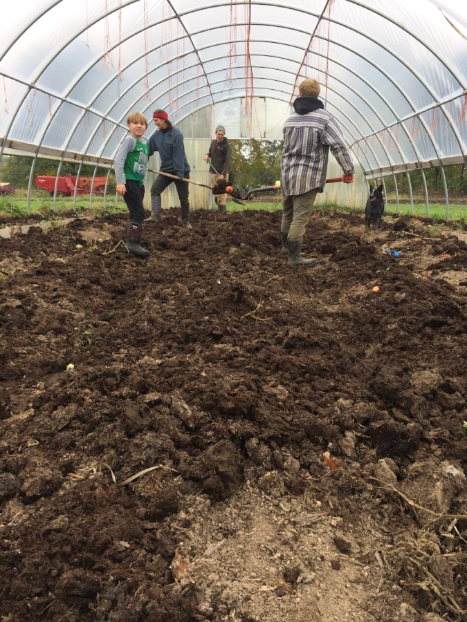 spreading beautiful farm made compost in the hoop house for next season