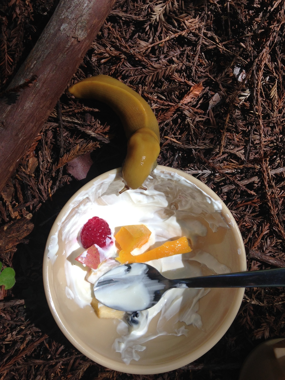 bananna slug breakfast.jpg