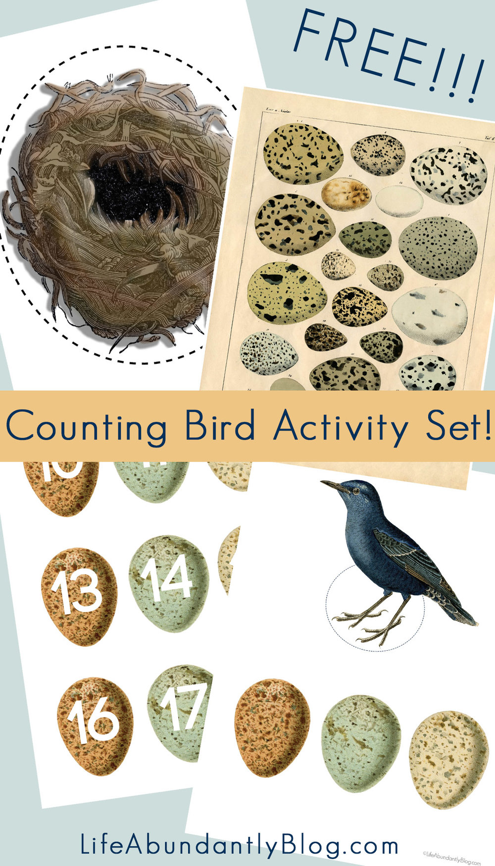 GORGEOUS activity kit for preschoolers all the way through elementary to be used for multiplication, basic counting, subtraction, addition, number recognition- using gorgeous vintage birds and eggs.