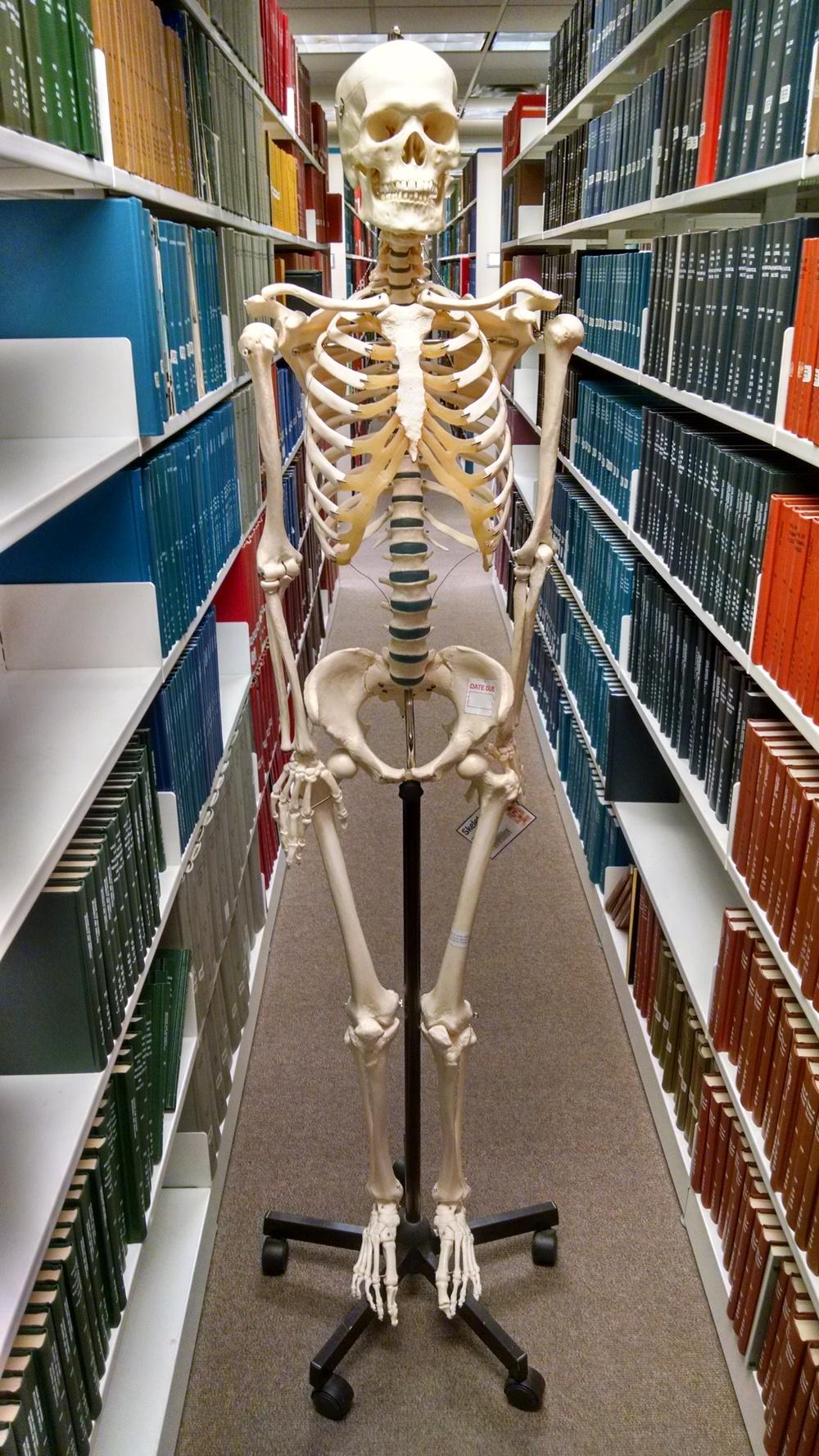 full skeleton.jpg