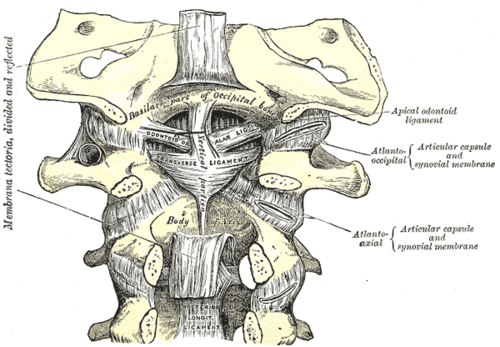 The Upper Cervical Spine — Mac Prible