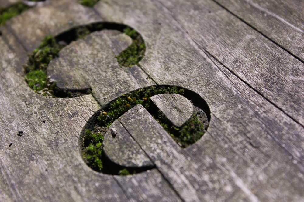 eco-typography