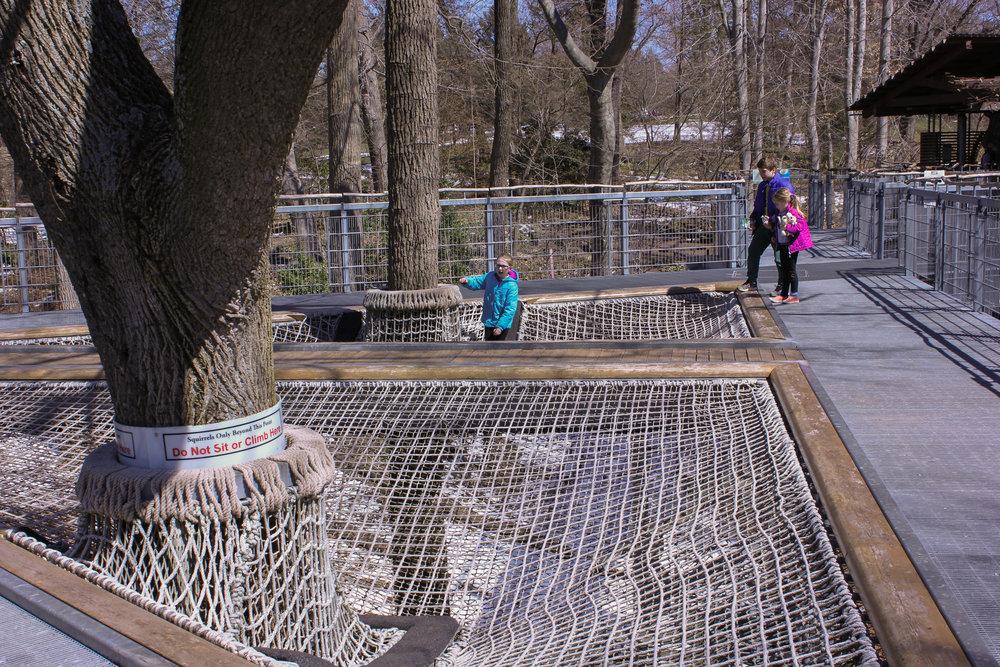 tree net-0122.jpg