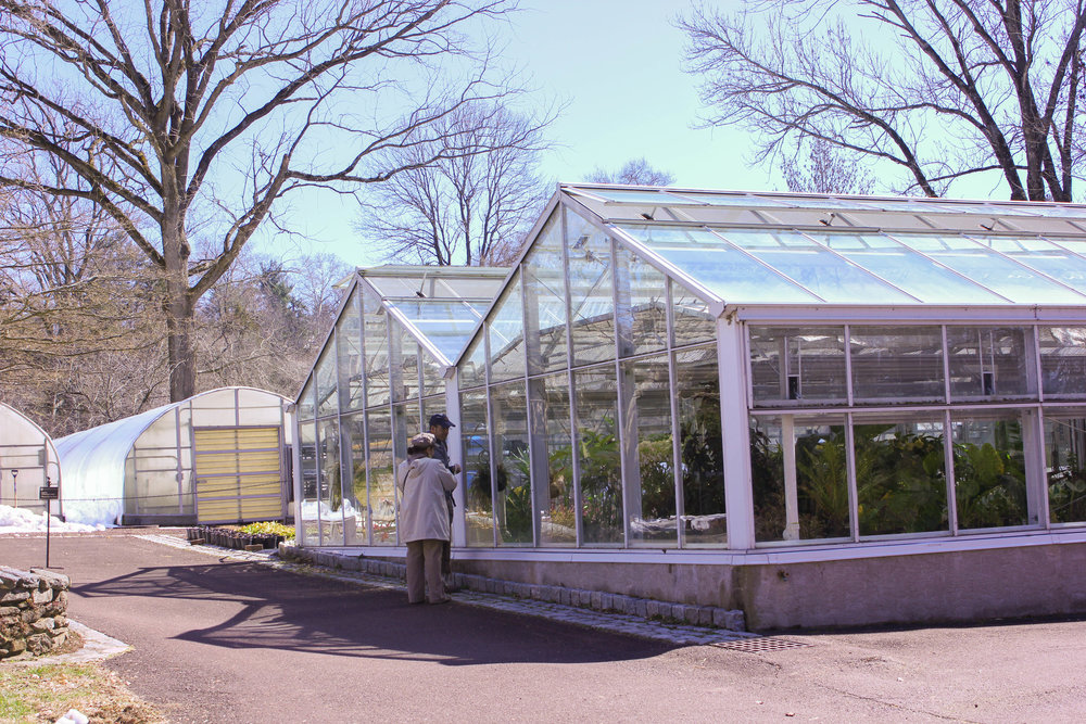 greenhouse bright-0366.jpg