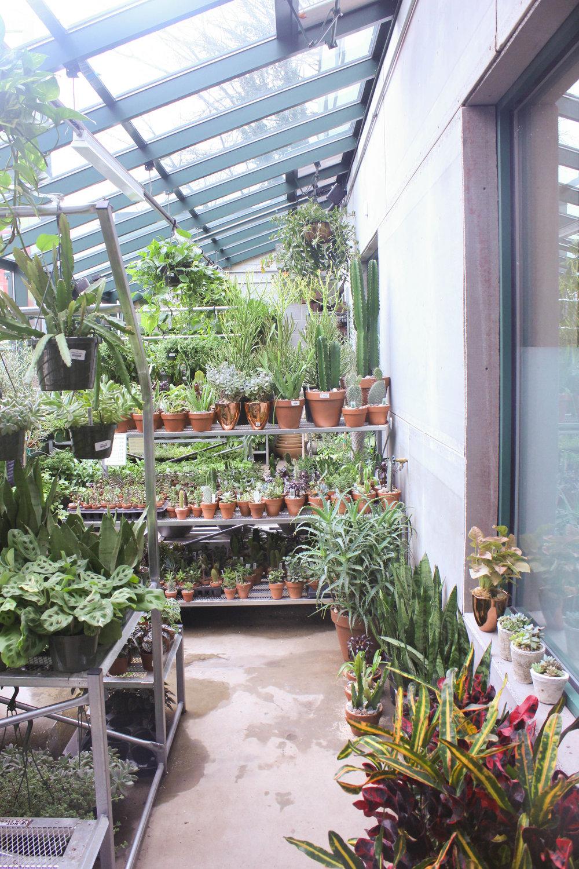 greenhouse-0974.jpg