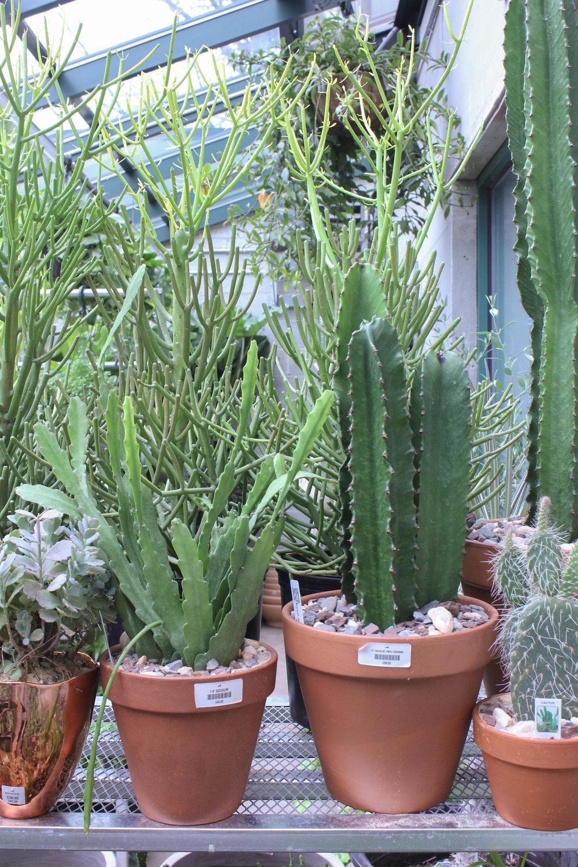 cactus-0979.jpg