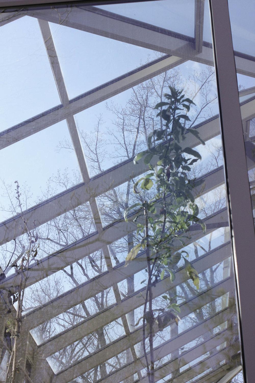 plant thriving-0875.jpg