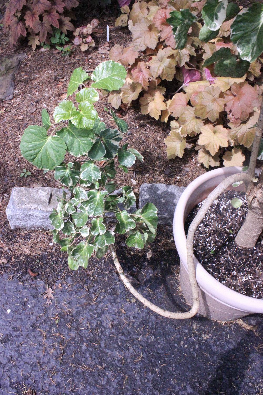 twig and pot-2793.jpg