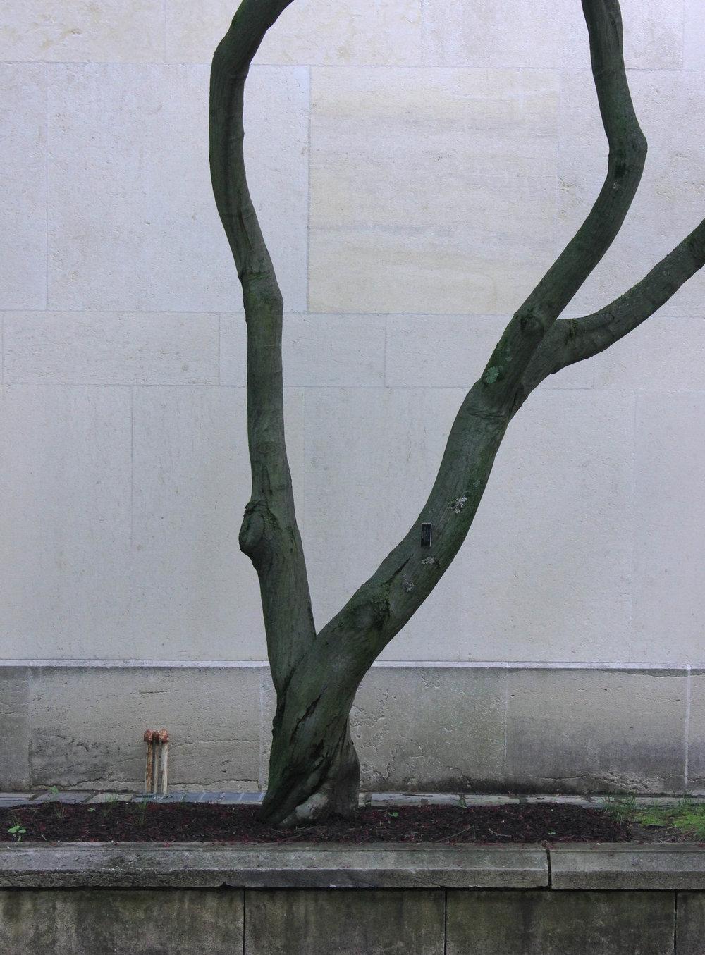 tree silhoutte-3130.jpg