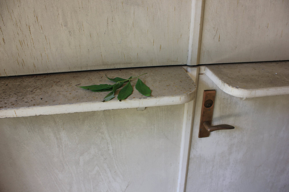 simple leaf-2911.jpg
