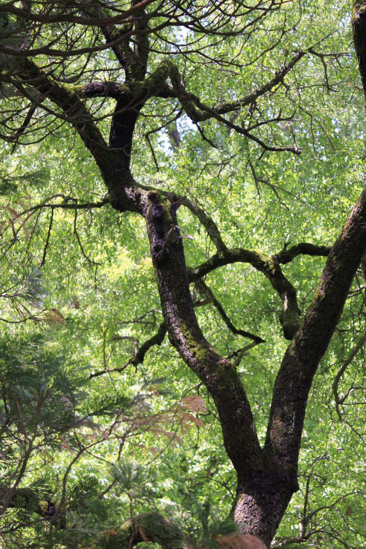 tree silhoutte-3024.jpg
