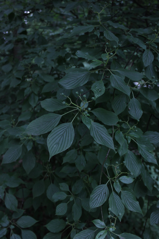 leaves-4329.jpg