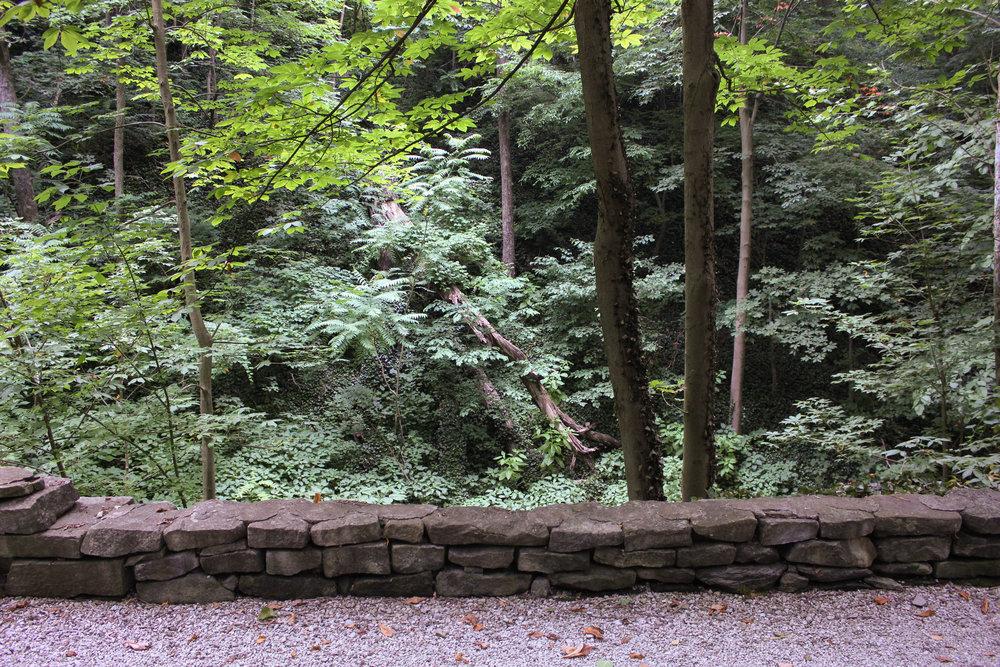 woods 2-4259.jpg