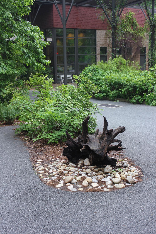 tree -3291.jpg