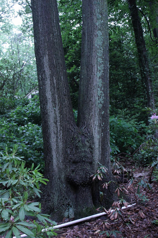 two tree-3456.jpg
