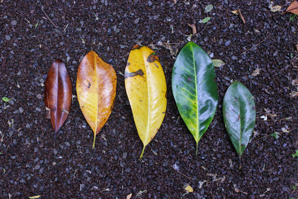leaves-3423.jpg