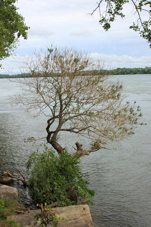 tree-6100.jpg
