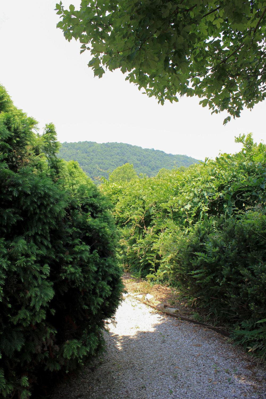 trail-4828.jpg