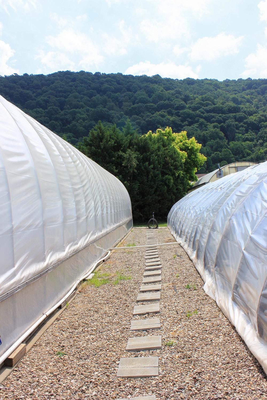 path-between-greenhouse.jpg