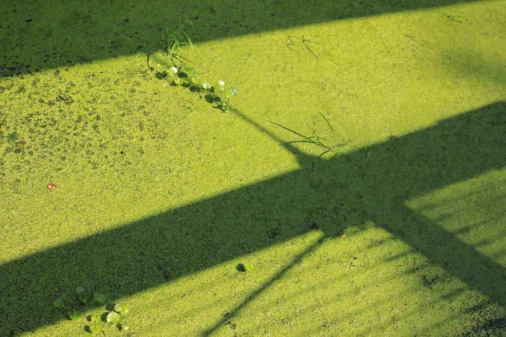 algae 2-6956.jpg