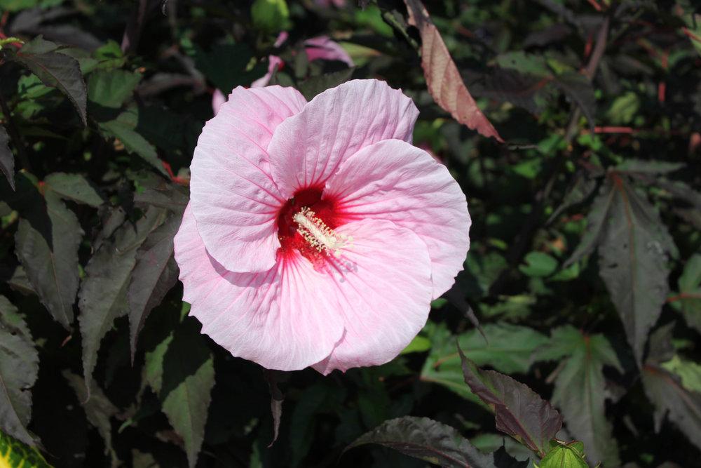 pink-6871.jpg