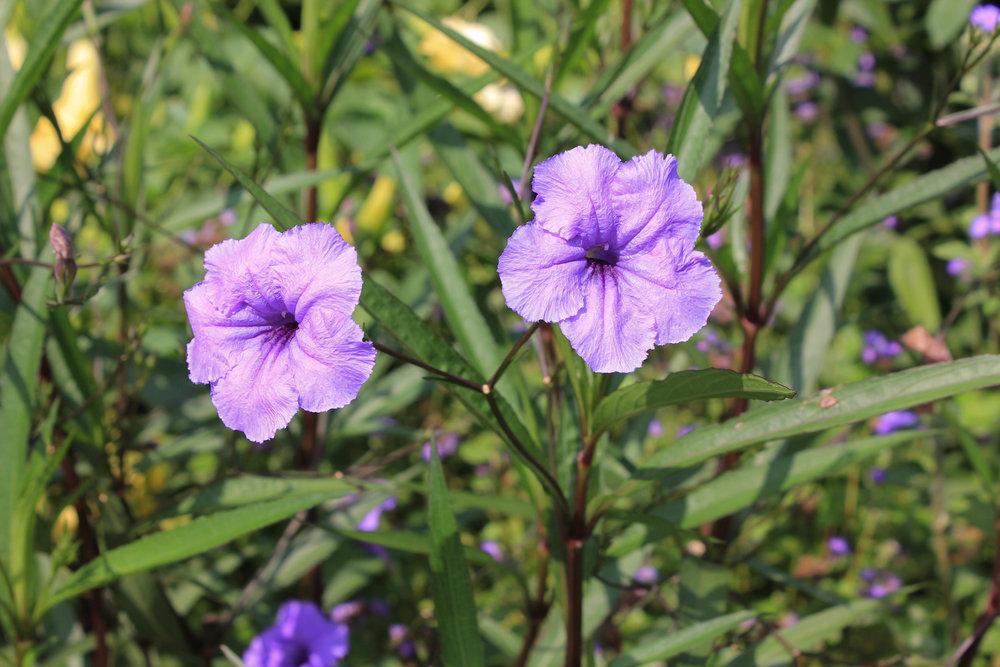 purple flowers 2-6875.jpg