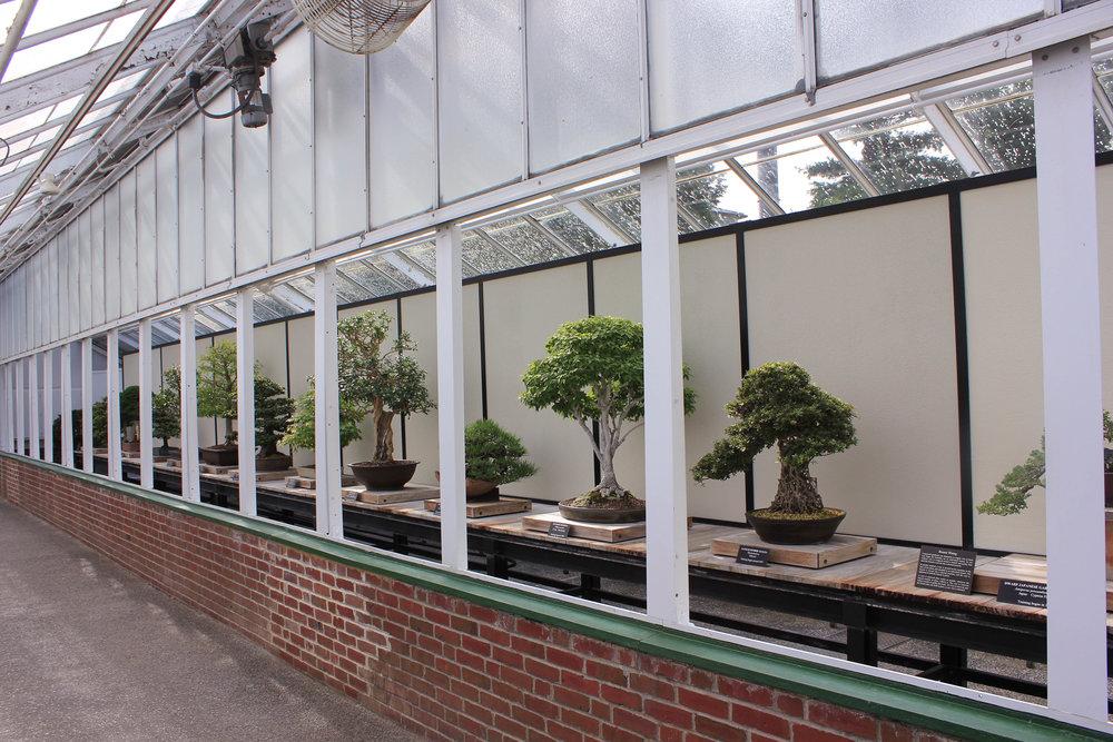 bonsai collection-7098.jpg