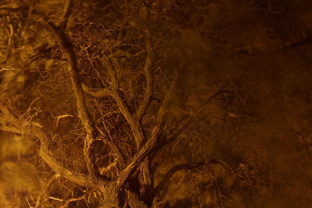 nightTree_1500.jpg