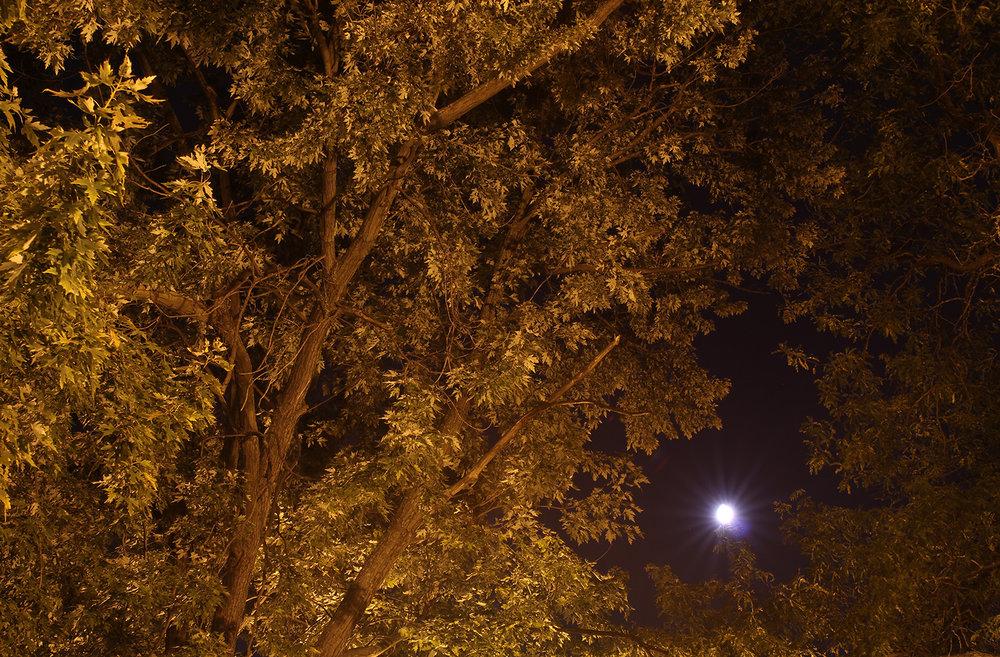 NightTree1_1500.jpg