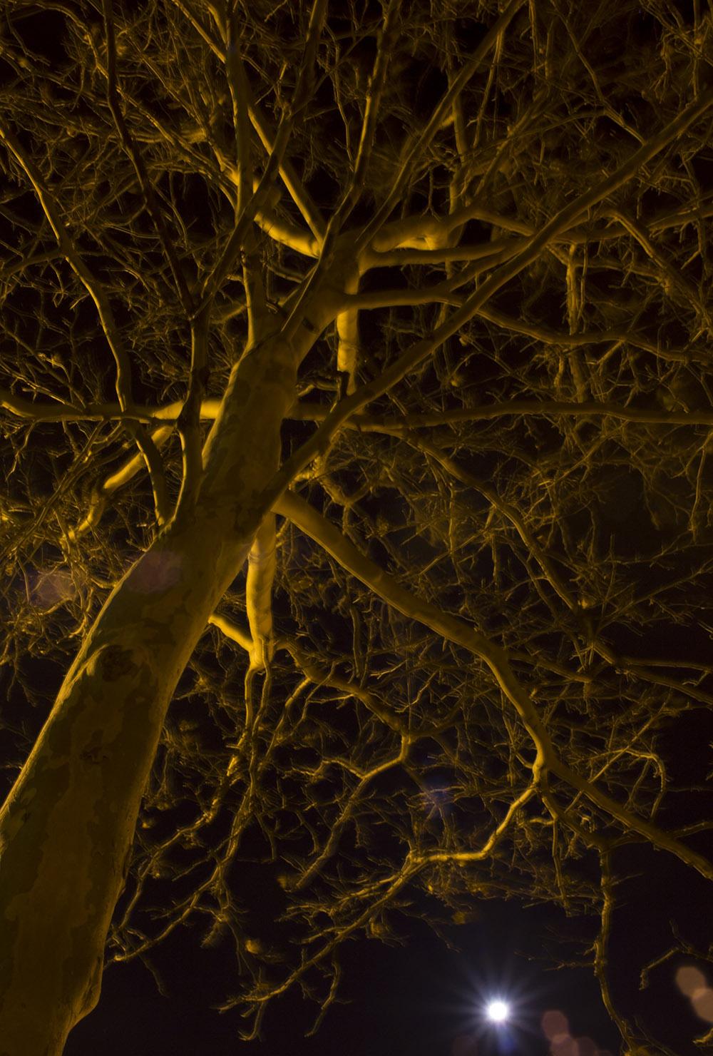 nightTree2_1500b.jpg
