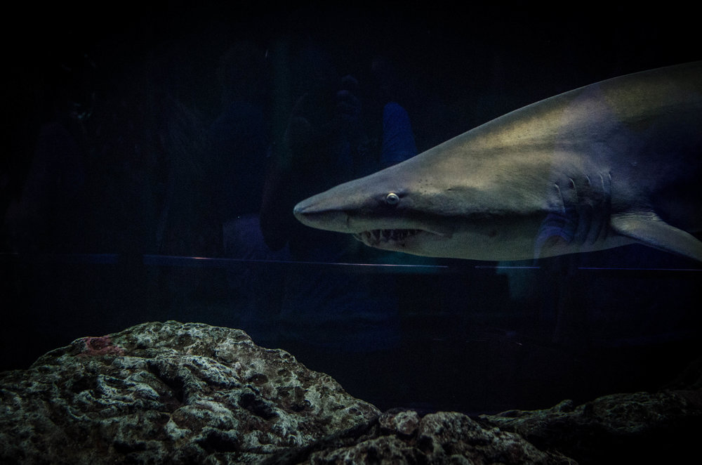 Baltimore, MD - Baltimore Aquarium