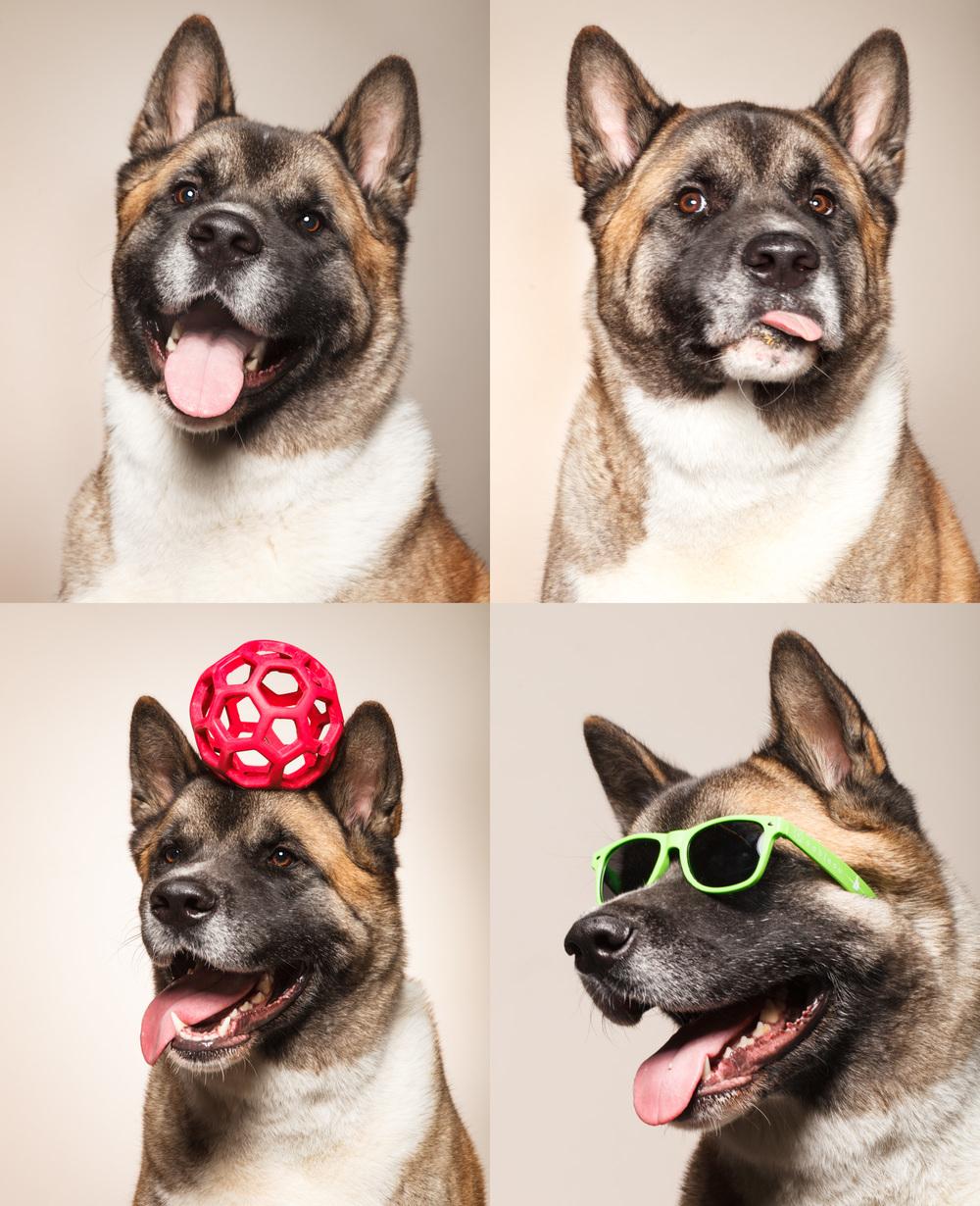 DogsBlogs.jpg