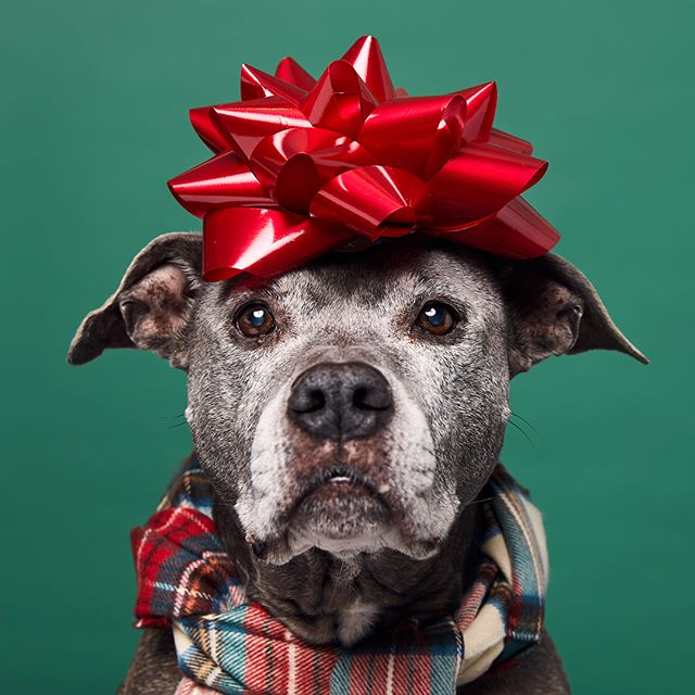 New tutorial on making holiday pet portraits on SLR Lounge! http://bit.ly/2zHcpn2