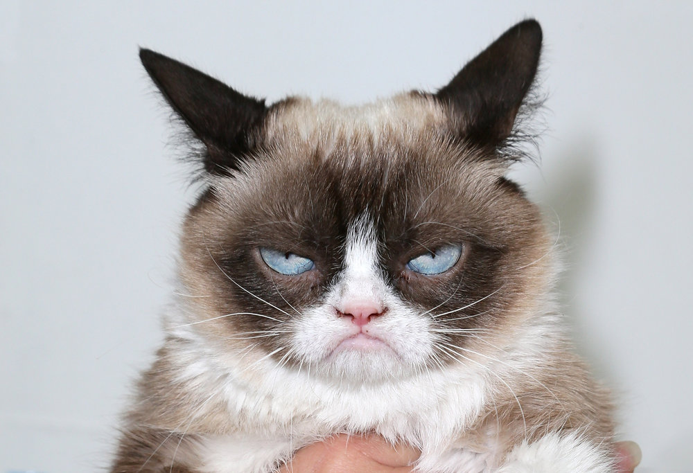 grumpy_cat_05_freelargeimages-com.jpg
