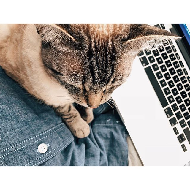 #writersblock 🐈 the best kind 💙