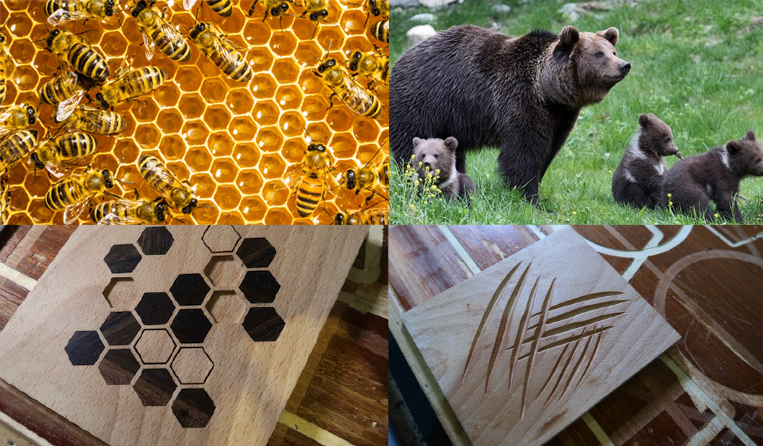 Ongoing projects for Honeybee conservancy association and Ferus project