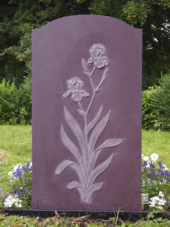 Stratton Iris1.JPG